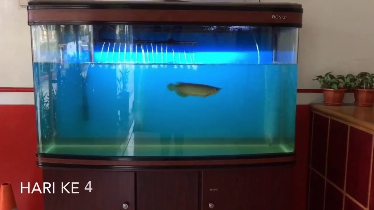 Penyebab Air Aquarium Berbusa Dan Cara Mengatasinya Berbagai Sebab