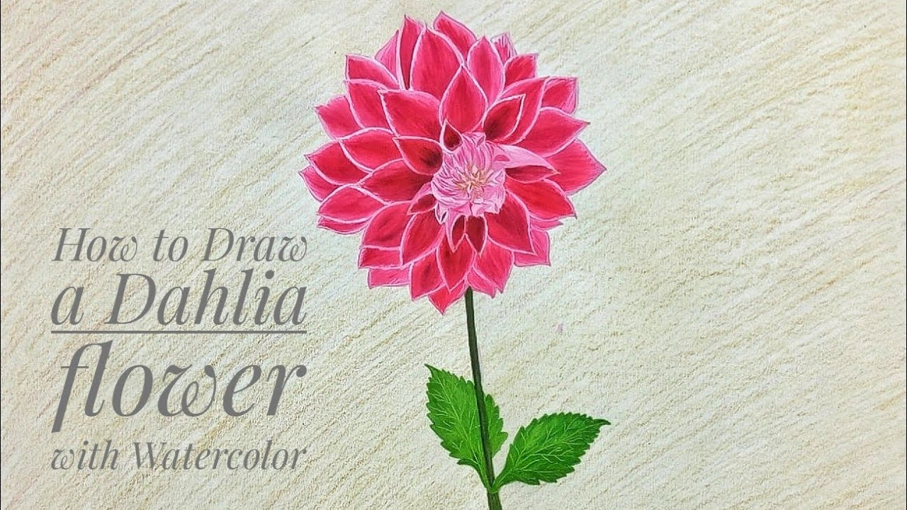 How To Draw A Dahlia Flower With Watercolor Youtube