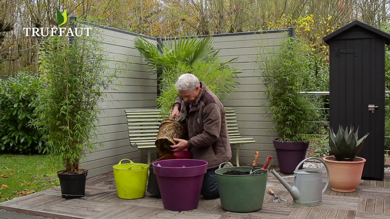 creer une haie de bambous sur la terrasse truffaut