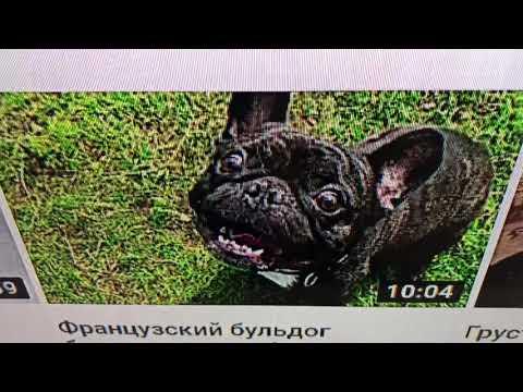 Киноконцерн Бульдкомпания Док продакшен