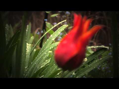 April Rain Song  Langston Hughes