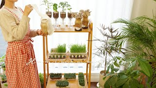 Tips for growing edible plants indoors in easy way / self-watering system for plants 🌿