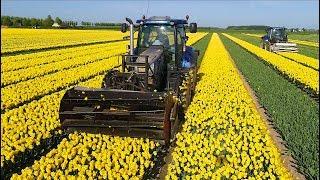 Topping Tulips | 2x New Holland T6.160 | 2.25 bedden | Maliepaard Stad aan t Haringvliet