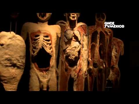 Factor Ciencia - Body Worlds (15/07/2013)