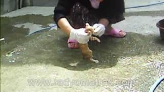 ev kedisi nasil yikanir :)  www.radyomatrak.com