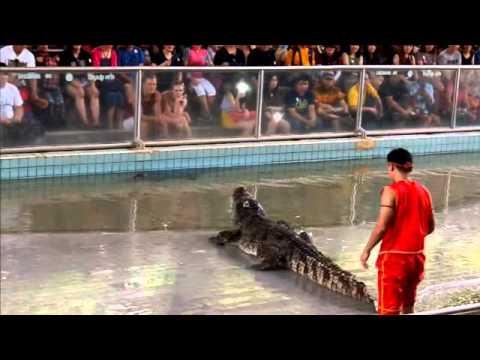 แสดงโชว์จระเข้ ฟาร์มจระเข้พัทยา pattaya Crocodile