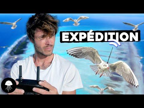 Comment cet oiseau prédira les catastrophes - DBY #81