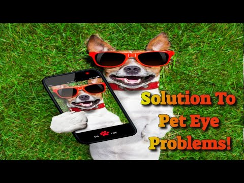 Eye Drops For Dogs For Conjunctivitis Caused By Allergies Or Foreign Bodies…
