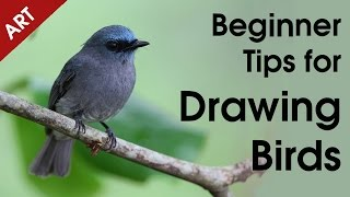 Beginner Tips for Drawing Birds [This N