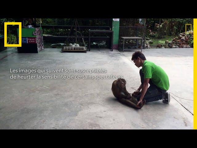 Immersion dans le cruel univers du tourisme animalier
