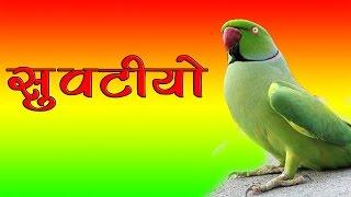 Latest Rajasthani Dj Mix Song | सुवटीयो Suvatiyo | FULL Audio | Superhit Marwadi Dj Songs 2017 New