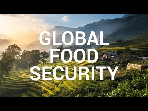Impact Story: Global Food Security