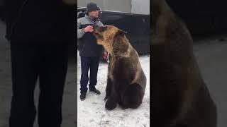 Приколы с медведем