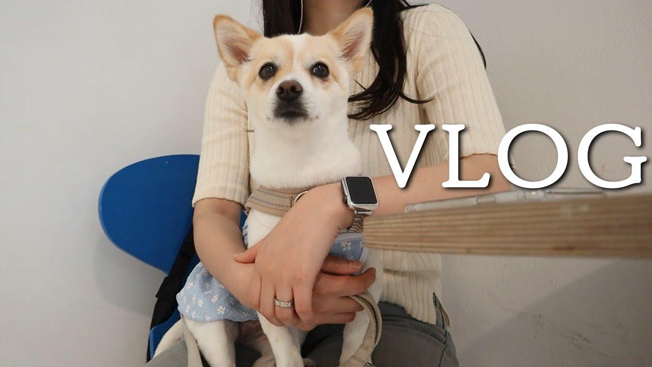 VLOG | 부부의 날 | 강아지 운동장 | 노리개 | 강아지 미용 | 라케이브 | 연남동 데이트 | 연트럴 파크 | 풀스트릿 | 퍼트커피