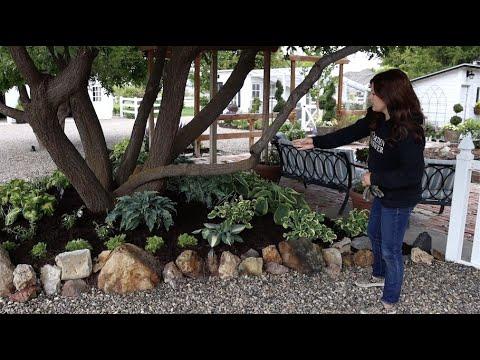 Planting A Hosta Garden Garden Answer Youtube
