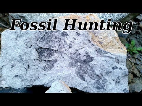 Fossil Hunting At Deep Creek Washington