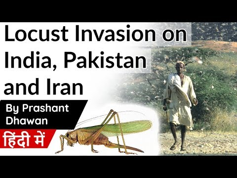 locust-invasion-on-india,-pakistan-and-iran-current-affairs-2020#upsc