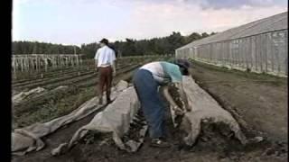 Ogorod.UA - Технология доктора Миттлайдера - часть 9(Учебный курс об оригинальном и эффективном способе выращивания овощей по методу доктора Миттлайдера. Этот..., 2010-08-18T20:12:27.000Z)
