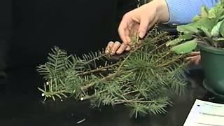 Gardening in the Zone: ISU Plant & Disease Clinic
