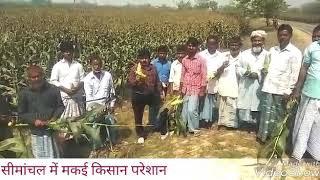 Bihar। Kishanganj। सुनिए कोचाधामन के मकई किसानों का दर्द