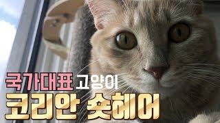 [ENG SUB] 왕과 겸상하는 고양이 코리안 숏헤어