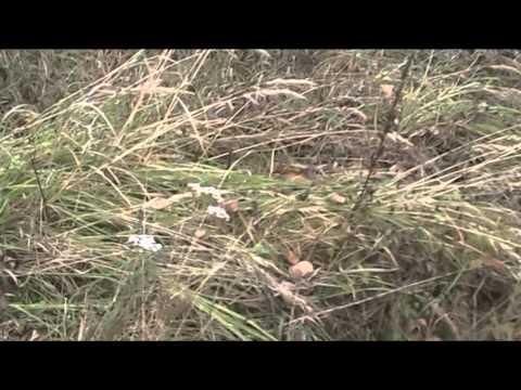 Генюши 142 РП Бетонные резервуары