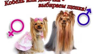 Выбираем пол щенка: кобель или девочка?