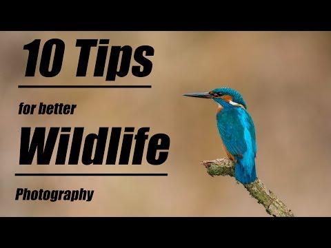 10 Tips für bessere Wildlife-Bilder