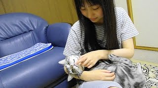 赤ちゃん抱っこで撫で撫でされる猫 thumbnail