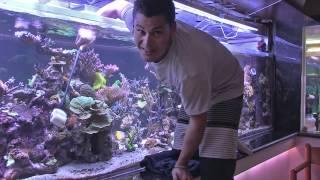 Peter's Fish Tank - Episode 2 - Tank Maintenance