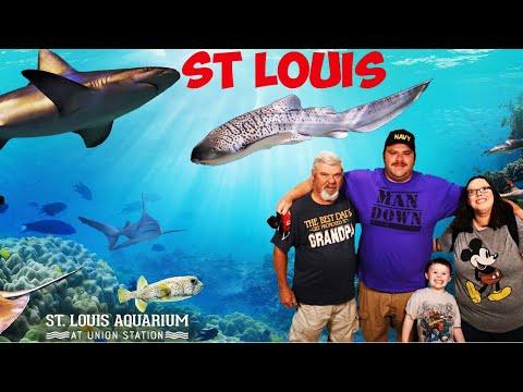 St. Louis Aquarium - YouTube