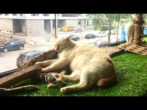 Travel Life(Vlog 6: Purradise  Cat Cafe in TTDL, Kuala Lumpur, Malaysia)