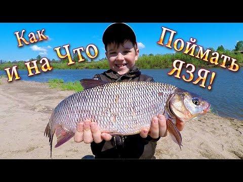 Рыбалка на Фидер! Как, Где и на Что Поймать ЯЗЯ? Один из Способов ЛОВЛИ!