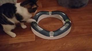Интерактивная игрушка для кошек Catit Senses Speed Circuit