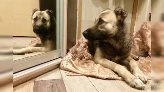 Брошенная собака из Воронежа!