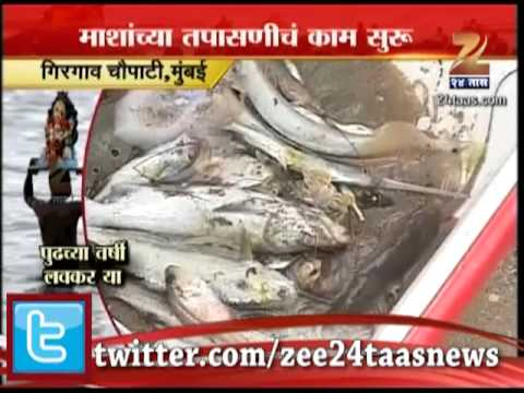 Zee24Taas : Sting Ray Fish Caught At Girgaon Chowpatty