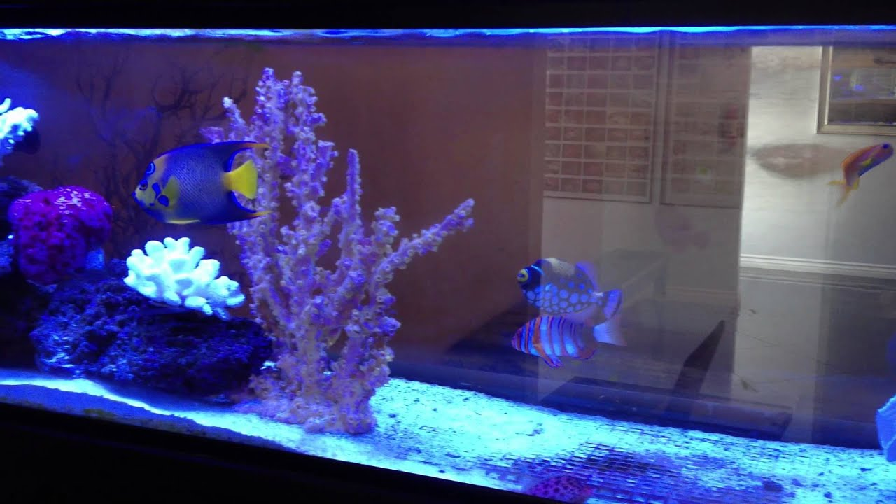 Aqua sd fish only tank youtube for Fish only saltwater tank