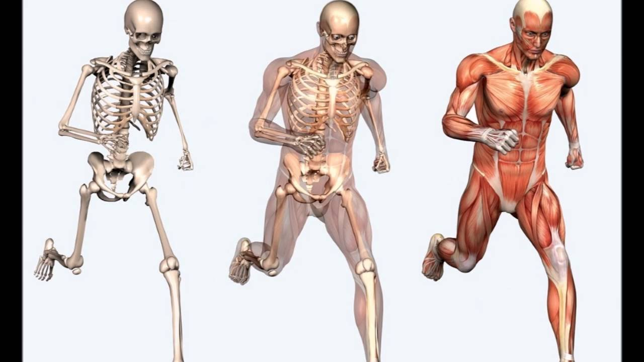 Do You Know These Medical Facts About The Human Body Brain Facts
