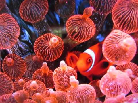 Viaje al fondo del mar serie de televisin - Wikipedia