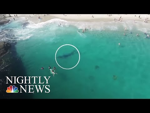Stunning Video of California Swimmers' Whale Encounter