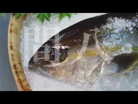 Kagoshima Fish Farming Of Kanpachi(Amber Jack) English