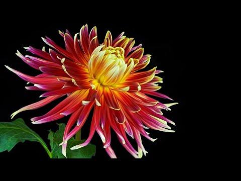 Музыка для души (Вальс цветов) !!!