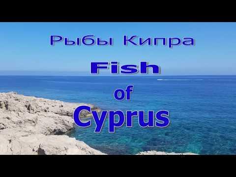 Рыбы Кипра. Каталог. Атака кальмара! Акула. Fish Of CYPRUS.+ Eng Sub. Сиган-Коммунист превращение
