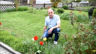 Das Ergebnis, Rasen auf einfache Art erneuern, verjüngen Teil2