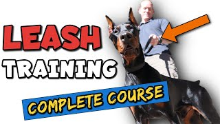 How to Leash Train a Doberman the RIGHT Way