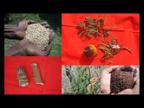 Folk Rice Formulations for Irritable Bowel Syndrome: Pankaj Oudhia's Medicinal Plant Database