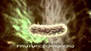 Helicobacter pylori - Photo Researchers
