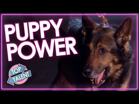 TOP 5 ADORABLE Dog Auditions On Got Talent Around The World! | Top Talent