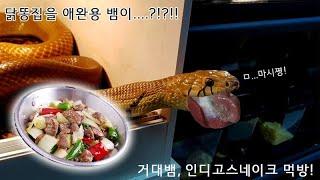 닭똥집을 뱀들이 쿰척쿰척 파충류 식사시간