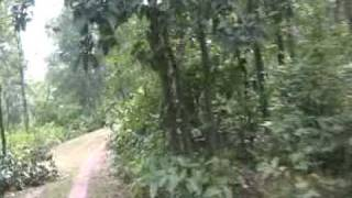 SCOOTREKKING BANKURA FOREST.MPG